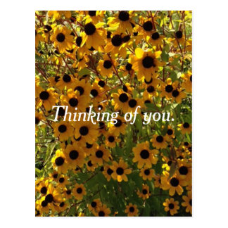 Black Eyed Susan Flowers Thinking of you Postcards