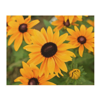 Black Eyed Susan in the Garden Wood Wall Art