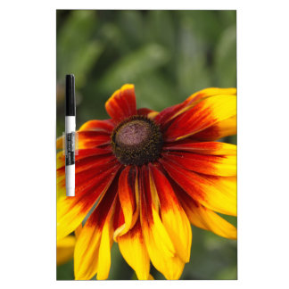 Black-eyed-Susan (Rudbeckia hirta) Dry Erase Board