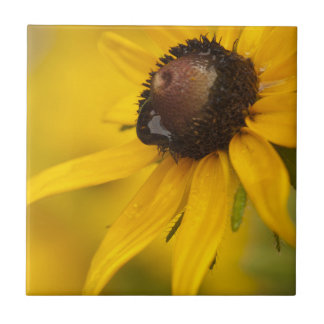 Black-Eyed Susan with a Teardrop Small Square Tile