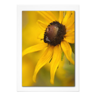 Black-Eyed Susan with a Teardrop Template Personalized Invites