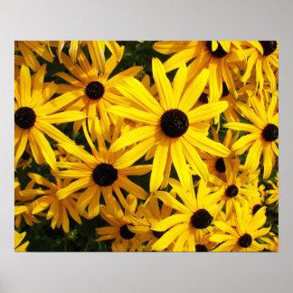 Black Eyed Susans Floral Poster