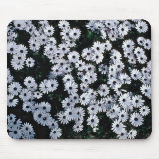 Black-Eyed White Daisies flowers Mouse Pad