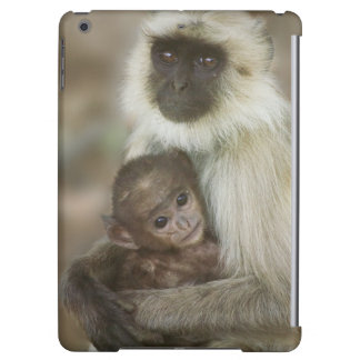 Black-face Langurs, mother with baby, in