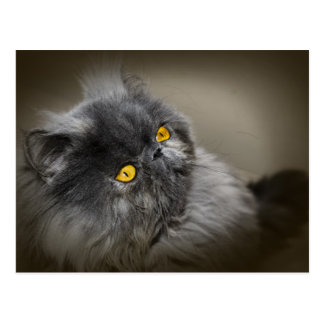 Black Fluffy Cat with Orange Eyes Postcard