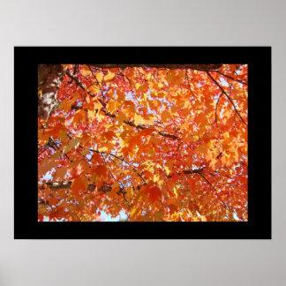 Black Frame Orange Colorful Fall Art Leaves Posters