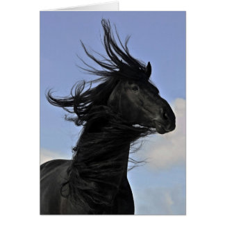 Black Friesian Horse Portrait Card