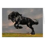 Black Friesian Horse Running Free