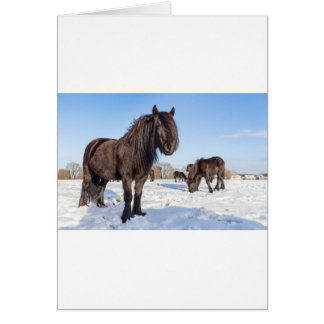 Black frisian horses in winter snow card