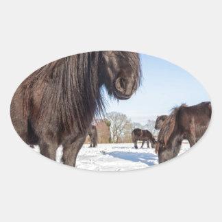 Black frisian horses in winter snow oval sticker