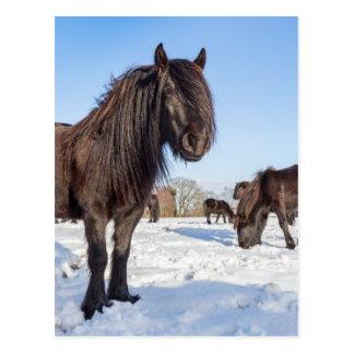 Black frisian horses in winter snow postcard