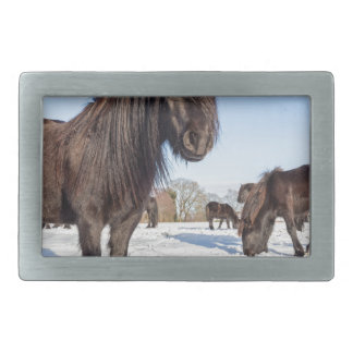 Black frisian horses in winter snow rectangular belt buckle