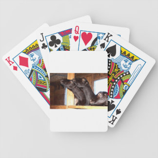 Black goats looking with purpose bicycle playing cards