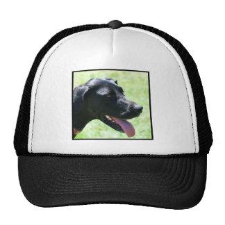 Black Great Dane Cap