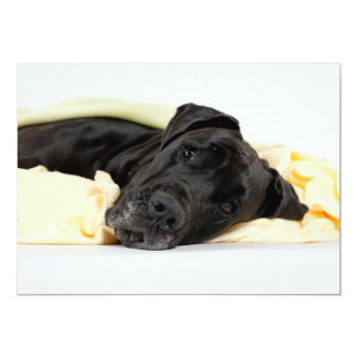 Black Great Dane - Deutsche Dogge schwarz Card