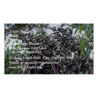 Black Gum nuts with its branches Business Card