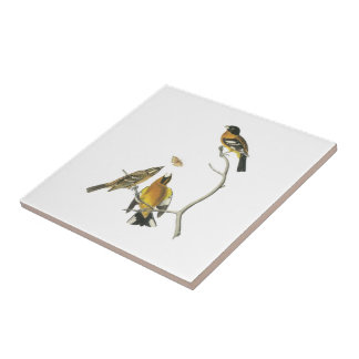 Black-headed Grosbeak by Audubon Tile
