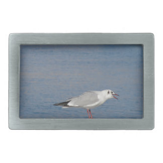Black-headed gull perched on post calling belt buckle
