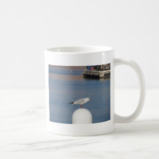 Black-headed gull perched on post calling coffee mug