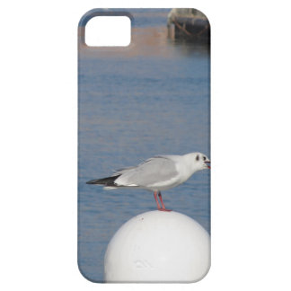 Black-headed gull perched on post calling iPhone 5 case