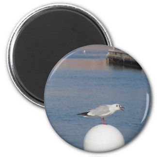 Black-headed gull perched on post calling magnet