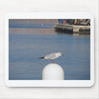 Black-headed gull perched on post calling mouse pad