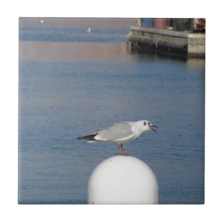 Black-headed gull perched on post calling tile