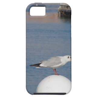 Black-headed gull perched on post calling tough iPhone 5 case