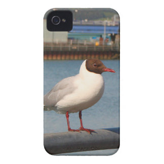 Black-headed gull, Scotland Case-Mate iPhone 4 Cases