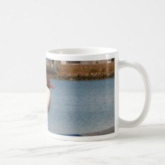 Black-headed gull, Scotland Coffee Mug