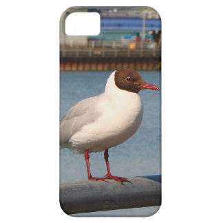 Black-headed gull, Scotland iPhone 5 Covers
