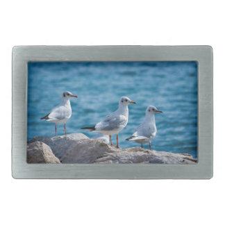 Black-headed gulls, chroicocephalus ridibundus belt buckles