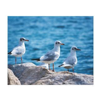 Black-headed gulls, chroicocephalus ridibundus canvas print