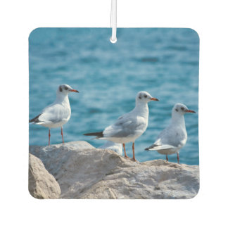Black-headed gulls, chroicocephalus ridibundus car air freshener