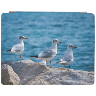 Black-headed gulls, chroicocephalus ridibundus iPad cover