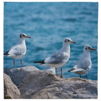 Black-headed gulls, chroicocephalus ridibundus napkin