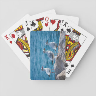 Black-headed gulls, chroicocephalus ridibundus playing cards
