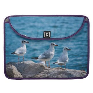 Black-headed gulls, chroicocephalus ridibundus sleeve for MacBook pro