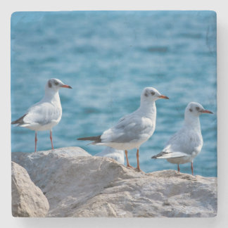 Black-headed gulls, chroicocephalus ridibundus stone coaster