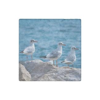 Black-headed gulls, chroicocephalus ridibundus stone magnet