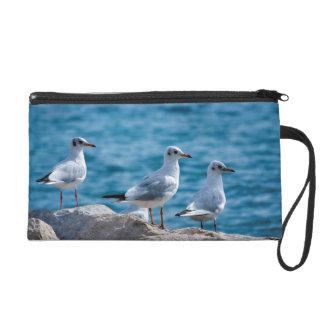 Black-headed gulls, chroicocephalus ridibundus wristlet