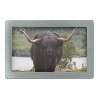 Black Highland cattle, Scotland Belt Buckle