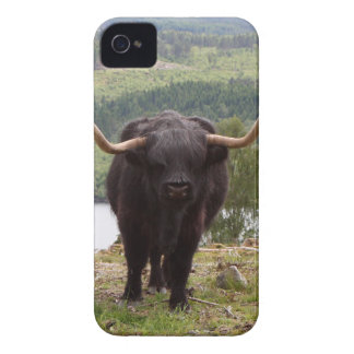 Black Highland cattle, Scotland iPhone 4 Cover