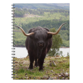 Black Highland cattle, Scotland Notebooks