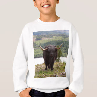 Black Highland cattle, Scotland Sweatshirt