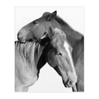Black horse equine photography black and white acrylic wall art
