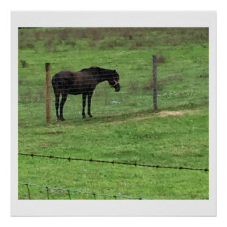 Black Horse Photo Poster