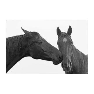 Black horse stallion photography black and white acrylic wall art