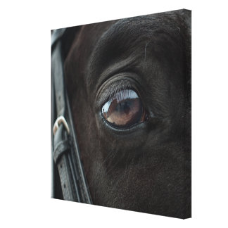 Black Horse's Eye Canvas Print