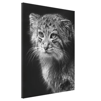 Black in white pallas cat portrait canvas print